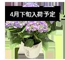 花鉢・鉢植え
