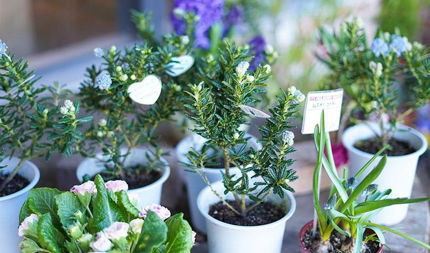鉢植え、花苗、園芸用品